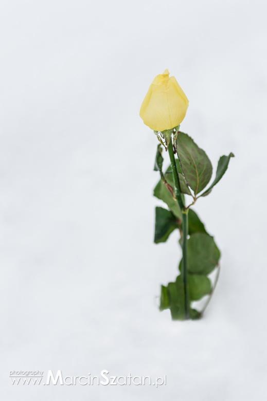 Baiała Róża plener